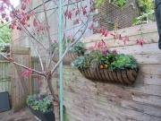 Exterior-Container-Patio-Plantscape-Philadelphia-1380