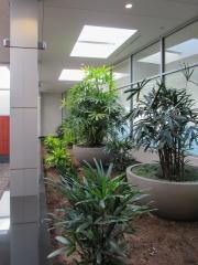 indoor-plants-for-businesses-philadelphia-0431