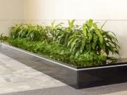 interior-plant-design-plantscape-philadelphia-3788