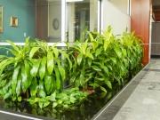 interior-plant-design-plantscape-philadelphia-3802