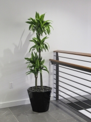 Corporate-Interior-Plantscape-Center-City-Philadelphia-1263
