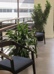 Corporate-Interior-Plantscape-Center-City-Philadelphia-1275