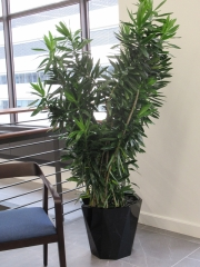 Corporate-Interior-Plantscape-Center-City-Philadelphia-1276
