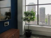 Corporate-Interior-Plantscape-Center-City-Philadelphia-1287