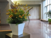 Corporate-Interior-Plantscape-Philadelphia-1442