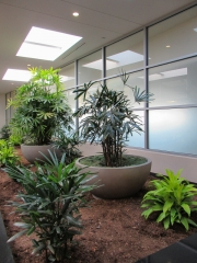 indoor-plants-for-businesses-philadelphia-0432