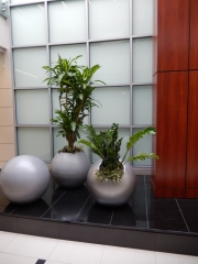 indoor-plants-for-businesses-philadelphia-2017-4