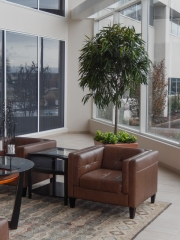 indoor-plants-for-businesses-philadelphia-4425