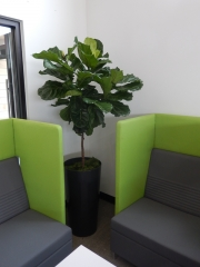 indoor-plants-for-businesses-philadelphia-4572
