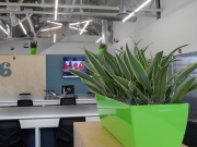 indoor-plants-for-businesses-philadelphia-4574