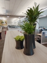 indoor-plants-for-businesses-philadelphia-4603