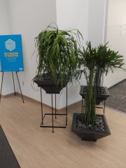 indoor-plants-for-businesses-philadelphia-4605