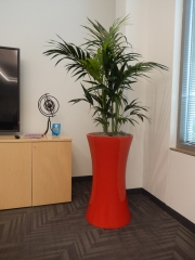 indoor-plants-for-businesses-philadelphia-4613