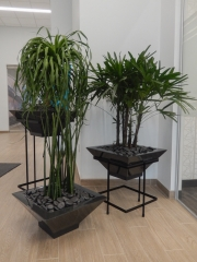 indoor-plants-for-businesses-philadelphia-4617