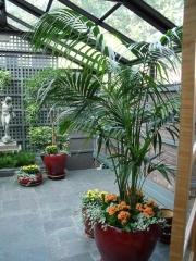 interior-plant-design-plantscape-philadelphia-0621