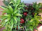 interior-plant-design-plantscape-philadelphia-4105