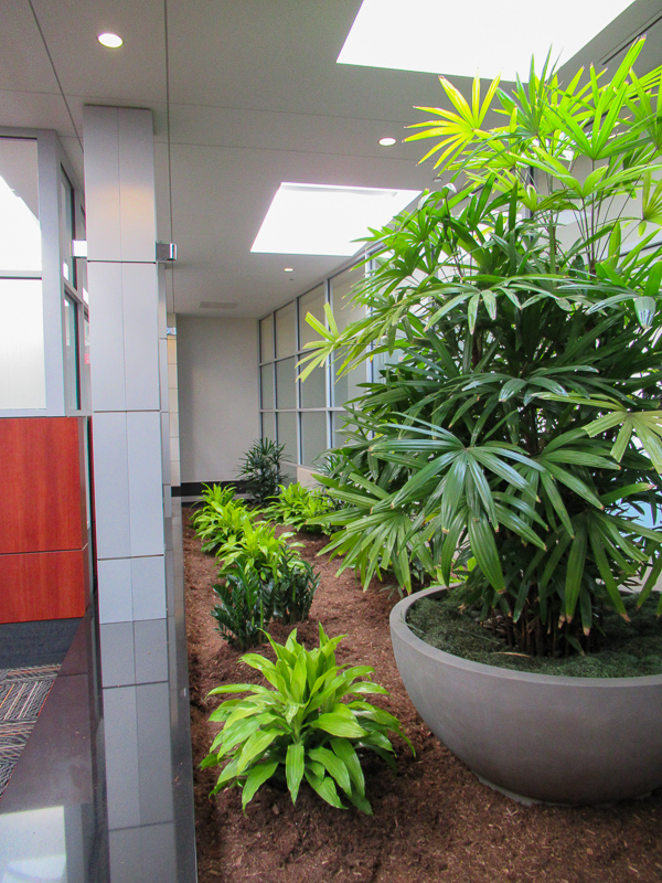 This page features interior plant design which we like to call Interior Plantscape, you might know it as Interior Landscaping. BATCH-O BLOOMS creates, ...