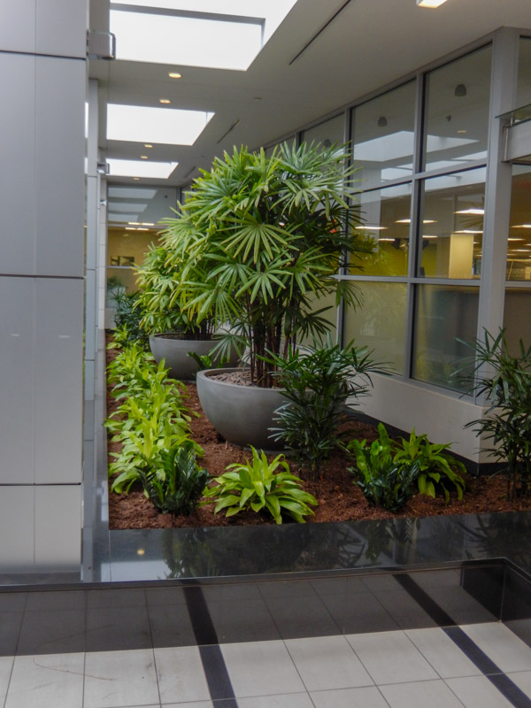 Interior Plantscape Portfolio