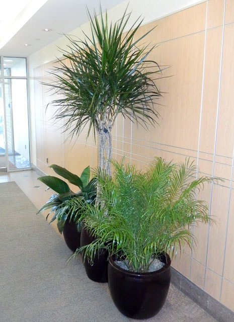 This Page Features Interior Plant Design Which We Like To Call Interior  Plantscape, You Might Know It As Interior Landscaping. BATCH O BLOOMS  Creates, ...