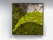 moss-walls-for-businesses-philadelphia-2018-1