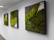 moss-walls-for-businesses-philadelphia-2018-3