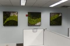 moss-walls-for-businesses-philadelphia-2018-4