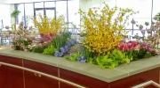 Permanent & Live Botanicals