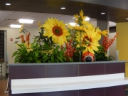 permanent-botanical-displays-for-businesses-philadelphia-2017-1