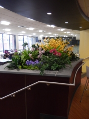 permanent-botanical-displays-for-businesses-philadelphia-2017-8