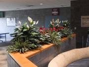 permanent-botanicals-3543