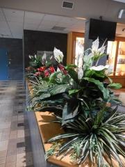 permanent-botanicals-3561