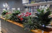 permanent-botanicals-3567